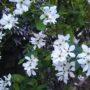 季節の移ろい~花から新緑へ